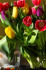 Preview iPhone wallpaper Red yellow purple tulips, flowers, bouquet, cat