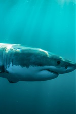 Sea animals, shark at underwater