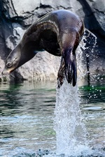 Preview iPhone wallpaper Sea lion jumping out water