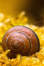 Preview iPhone wallpaper Snail, insect, yellow grass