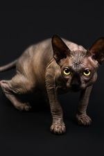 Preview iPhone wallpaper Sphynx cat, yellow eyes