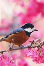 Preview iPhone wallpaper Spring, flowering, pink flowers, bird