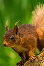 Squirrel standing on stump