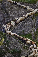 Preview iPhone wallpaper Steep stone stairs, sheep, cliff