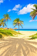 Preview iPhone wallpaper Summer, tropical, palm trees, sands, sea, beach