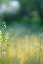 Summer, wildflowers, grass, bokeh