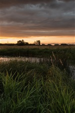 Sunset, field, river, trees, clouds, dusk