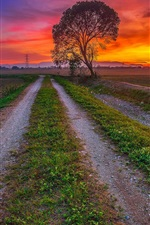 Preview iPhone wallpaper Sunset, fields, road, trees, dusk