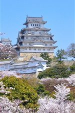 Preview iPhone wallpaper Travel to Himeji City, spring, sakura blossoms, Japan