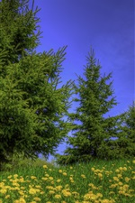 Preview iPhone wallpaper Trees, grass, wildflowers, blue sky