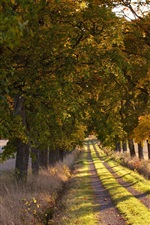 Preview iPhone wallpaper Trees, road, path, grass, nature, field