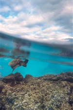 Preview iPhone wallpaper Turtle at the underwater, sea, water