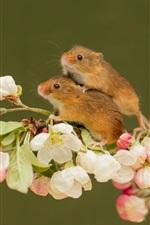 Dois ratos, flores cor-de-rosa