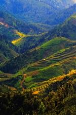 Vietnam, Sapa, mountains, trees, fields