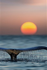 Preview iPhone wallpaper Whale tail out water, sea, sunset
