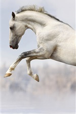 Preview iPhone wallpaper White horse fast run