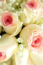Preview iPhone wallpaper White pink petals roses