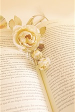 White rose flower and book