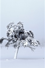 Preview iPhone wallpaper White world, thick snow, trees, winter