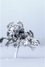 White world, thick snow, trees, winter