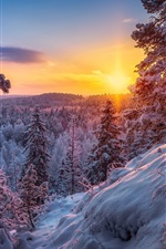 Preview iPhone wallpaper Winter, forest, snow, sunset, sun rays