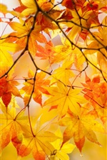 Preview iPhone wallpaper Yellow maple leaves, twigs, tree, autumn