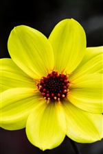 Preview iPhone wallpaper Yellow petals flower macro photography, pistil, bokeh