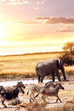 Preview iPhone wallpaper African, animals, elephant, zebra, deer, trees, sunset