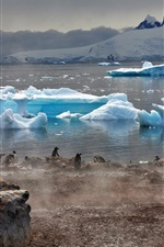 Antarctica icebergs, coast, penguins, fog