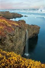Arctic Eden, sea, coast, ice, plants