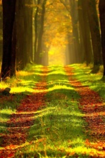 Preview iPhone wallpaper Autumn forest, path, grass, sun rays