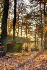 Preview iPhone wallpaper Autumn, forest, sun rays, hut