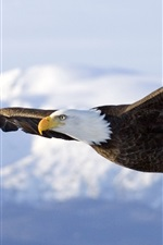 Preview iPhone wallpaper Bald eagle flight, wings