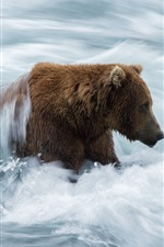 Preview iPhone wallpaper Bear in river, stream