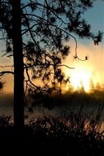 Bonito, pôr do sol, árvores, rio, sol, raios