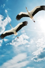 Preview iPhone wallpaper Bird two cranes flying in the sky, clouds