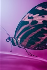 Preview iPhone wallpaper Butterfly, wings, purple petals