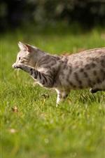 Cat run in the grass