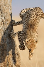 Preview iPhone wallpaper Cheetah jump down from tree
