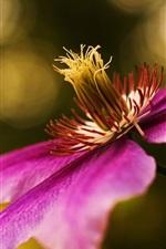 Preview iPhone wallpaper Clematis flowers, purple petals macro photography