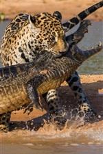 Caça ao crocodilo e jaguar