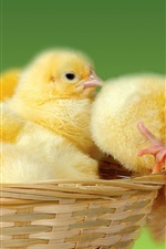 Preview iPhone wallpaper Cute chicks in basket
