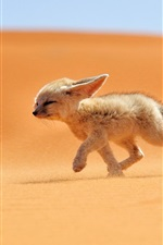 Preview iPhone wallpaper Cute fox walk in the desert