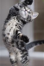 Preview iPhone wallpaper Cute kitten dancing