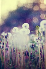 Preview iPhone wallpaper Dandelion, wildflowers, glare, blurry background