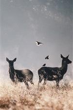 Preview iPhone wallpaper Deer and birds, grass