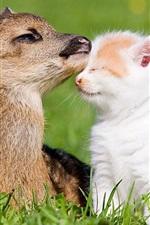 Preview iPhone wallpaper Deer and kitten, friends, grass