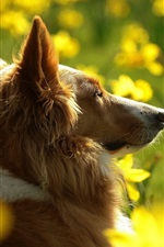 Preview iPhone wallpaper Dog and yellow flowers