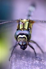 Preview iPhone wallpaper Dragonfly rest, head, eyes