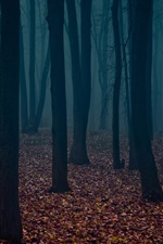Preview iPhone wallpaper Dusk, forest, trees, fog, leaves